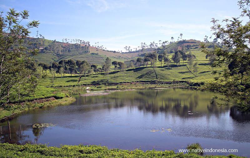 pangalengan rancabuaya - danau kebun teh cukul