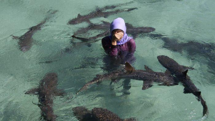 karimun jawa - penangkaran ikan hiu
