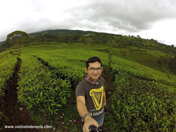 kebun teh sukawana - kebun teh di lembang