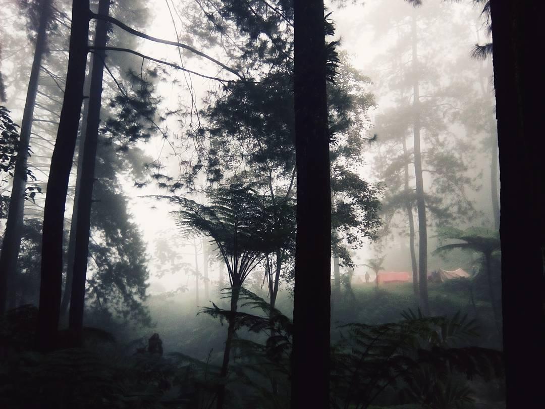 Curug Cipurut Hutan Pinus