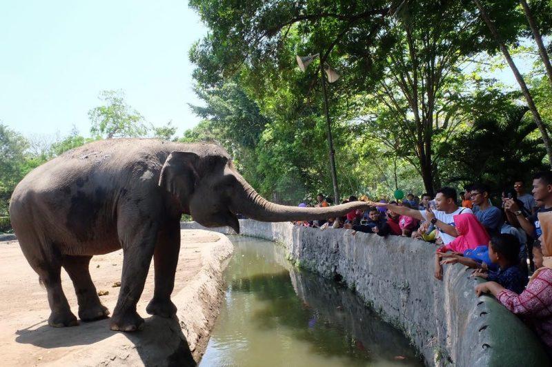 Happy Loka Animal