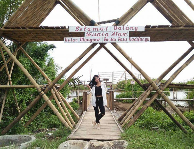 Mangrove Kulon Progo Entrance
