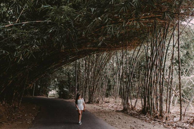 desa Penglipuran Bamboo Forest