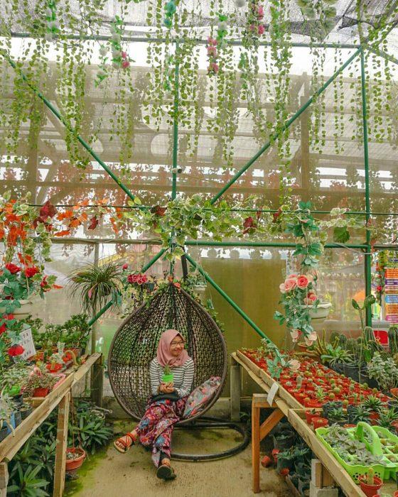 Green House Lezatta Photo Spot 3