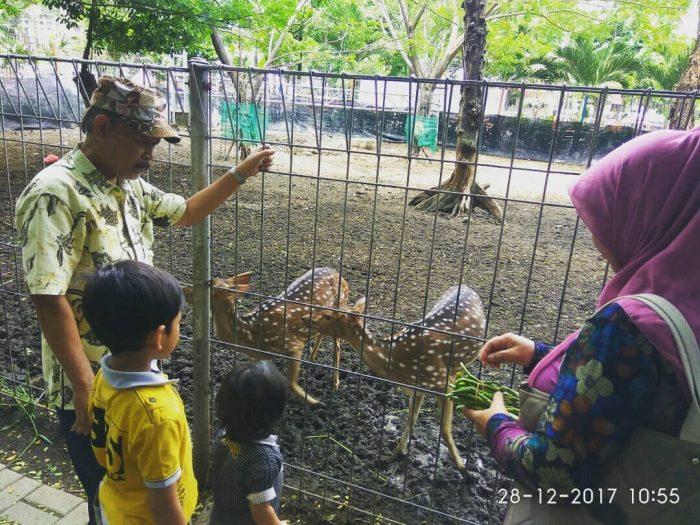 Kebun Bibit Surabaya Rusa
