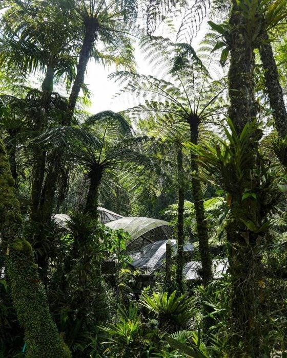 Kebun Raya Bedugul Paku 1