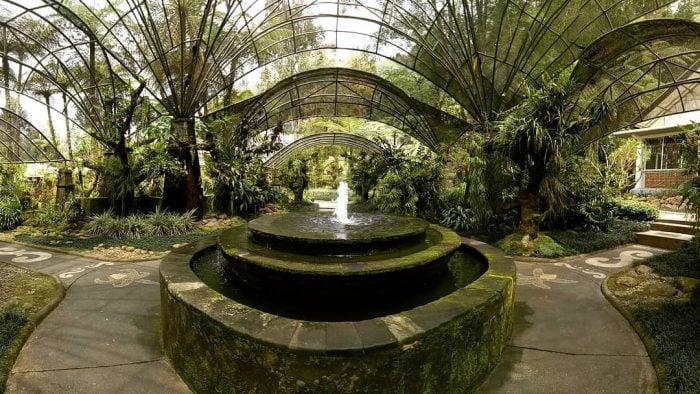 Kebun Raya Bedugul Paku