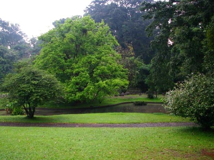 Kebun Raya Bogor Rindang