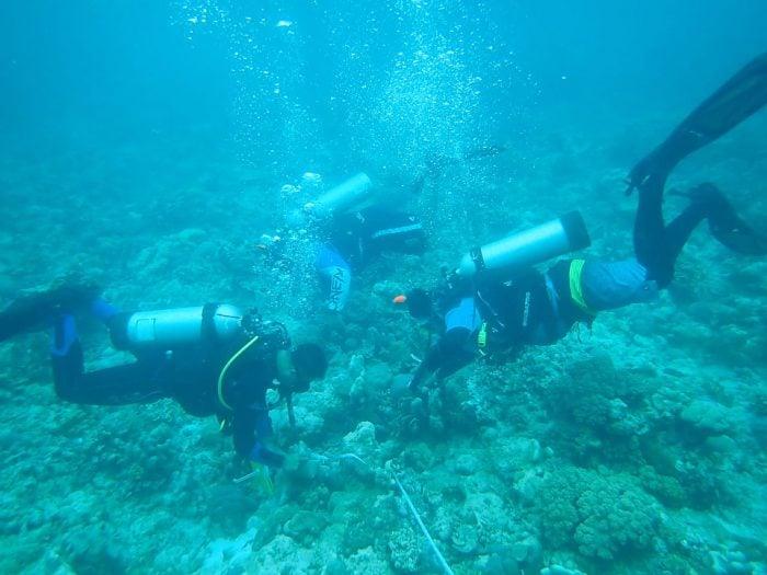 Pulau Bair Dive 1