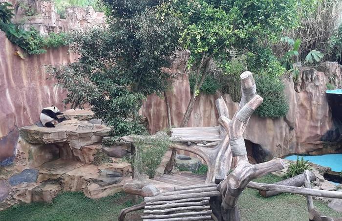 Taman Safari Bogor Istana Panda 1