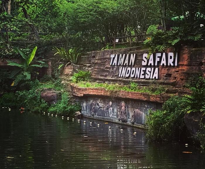 Taman Safari Bogor Pool