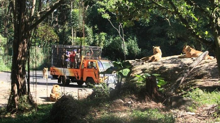 Taman Safari Bogor Siang