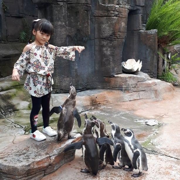 Taman Safari Prigen Feeding Penguin