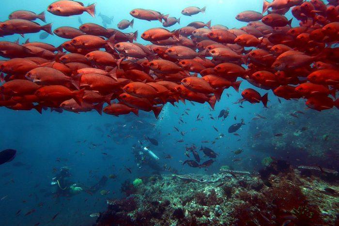 Teluk Triton Dive