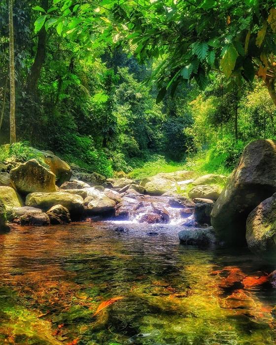 Curug Nangka Forest