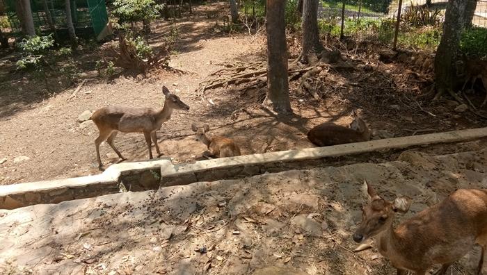 Giri Tirta Kahuripan Mini Zoo