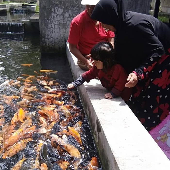 Kuntum Farm Fish Feed
