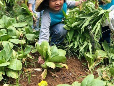 Kuntum Farm Field, Tempat Wisata Keluarga di Bogor yang Populer