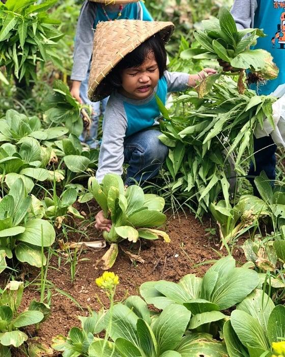 Kuntum Farm Panen Sayur