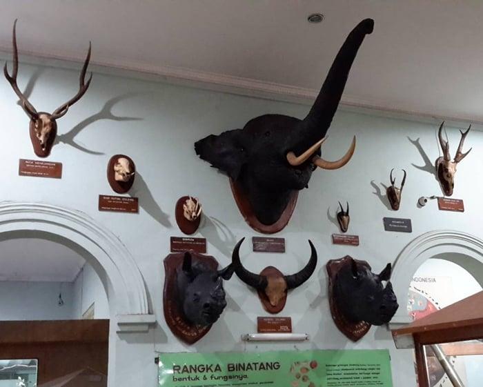 Museum Zoologi Koleksi 2
