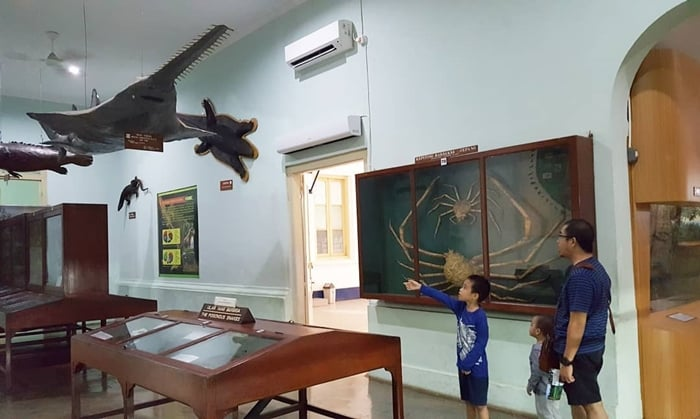 Museum Zoologi Koleksi Ikan