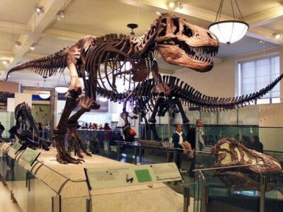 Museum Zoologi, Mengenalkan Berbagai Hewan dari Zaman Prasejarah