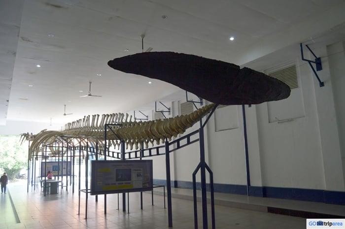 Museum Zoologi Paus Biru
