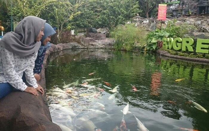 KOlam Koi