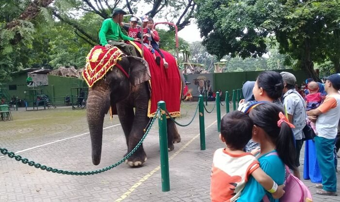 Kebun-Binatang-Surabaya 2