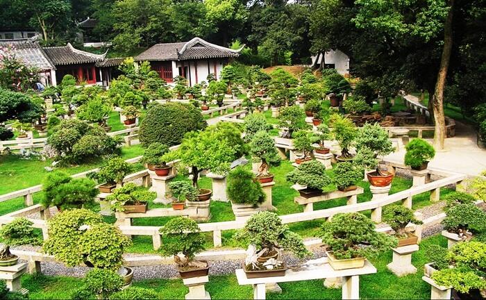 taman bonsai