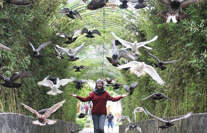 terowongan burung