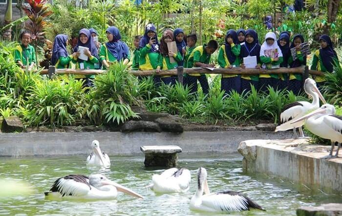 Kolam Pelikan lembah hijau lampung. sering dikunjungi rombongan siswa sebagai bagian dari kegiatan pendidikan mereka.