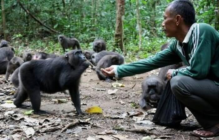 Menyapa Teman kera hitam di kawasan Karaenta taman nasional bantimurung