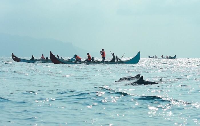 Wisata melihat lumba lum amerupakan unggulan teluk kiluan. lumba lumba disini populasi terbesar di dunia