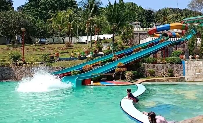 Prosotan Dewasa di Jatuluhur Water World, dengan ketinggian mencapai 11.5 m