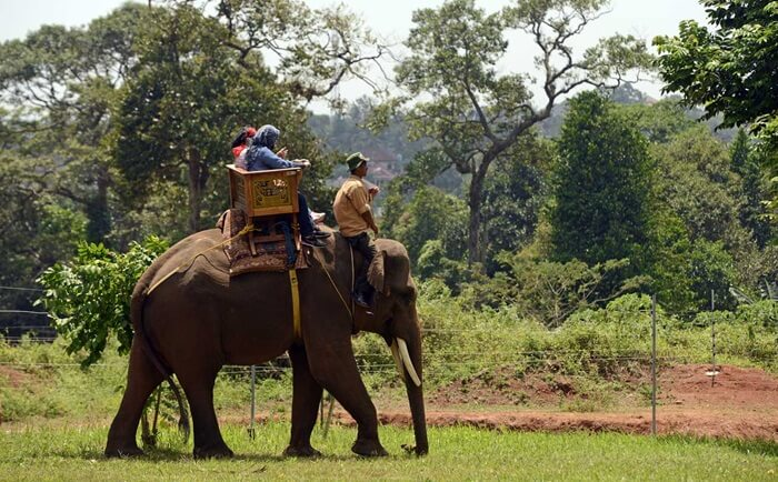 Tunggang Gajah lembah hijau lampung, bagian darikegiatan interaksi pengunjung dengan hewan