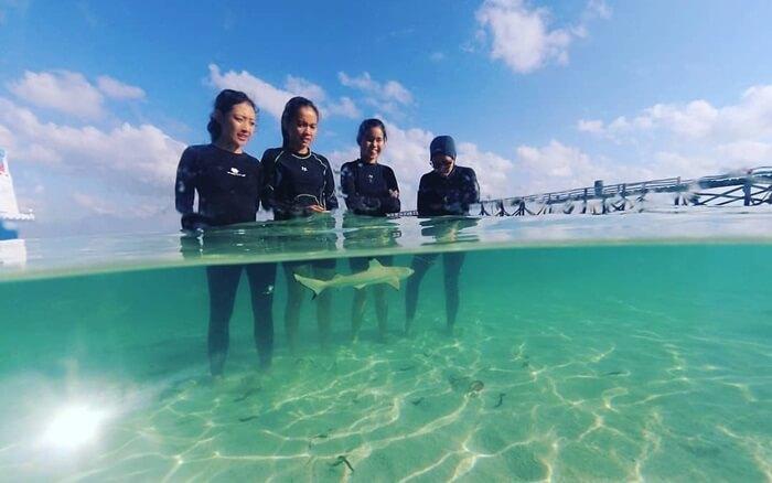 Bayi hiu banyak terdapat di kawasan taman nasional taka bonerate, Hiunini tidak berbahaya dan jinak pada pengunjung