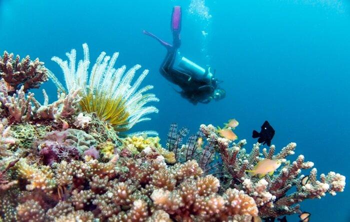 diving di trumbu karang Taman Nasional taka bonerate, salah satu spot terbaik di dunia