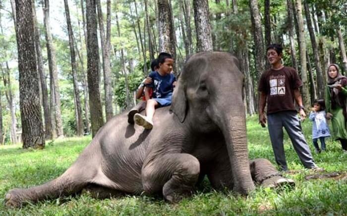 menaiki gajah di punti kayu dnegan didampingi pawang berpengalaman