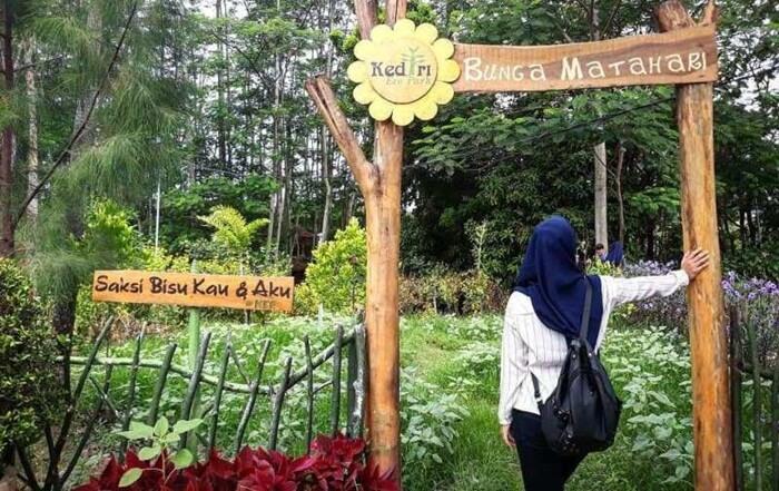 taman bunga matahari, salah satu wahana cantik di kediri eco park