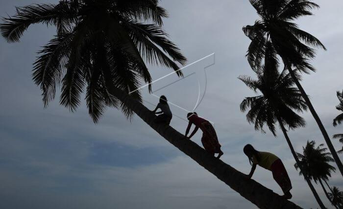 3 Anak bermian di pohon kelapa iconik pantai sekerat