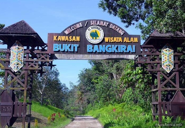 Bukit Bangkirai objek wisata hutan tropis alami yang habistatany terdiri dari kayu bangkirai berusia puluhan hingga ratusan tahun