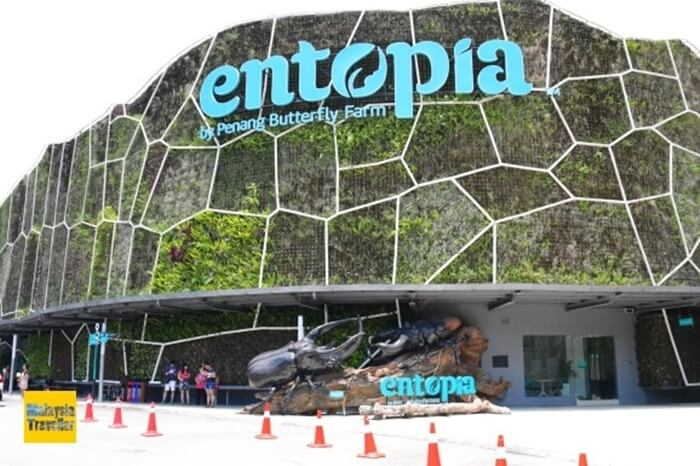 Entopia, tempat wisata di penang yang mengenalkan kehidupan serangga dan kupu kupu