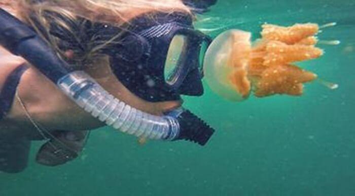 perjumpaanmanusai dnegan ubur-ubur di dalam danau pulau kakab tidak berbahaya seperti jika perjumpaan itu terjadi di lautan