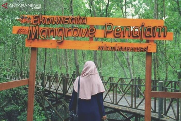 wisata di penajam paser utara ecowisata mangrove mendekatkan masyarakat dnegan bakau dan mengenalkan segala keuntungan dari keberadaan mangrove bagi lingkungan
