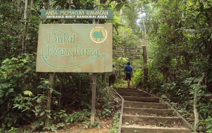 untuk mencapai canopy bridge di kawasan bukit bangkirai, [engunjung mesti trekking melalui kawasan hutan alam