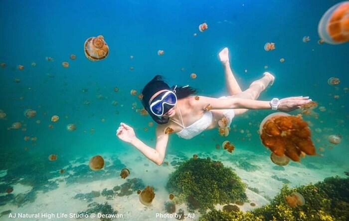 menyelam di danau ubur-ubur pulau kakaban