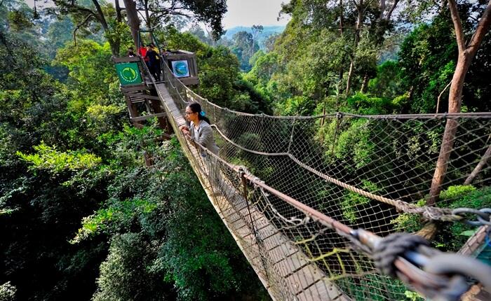 menimati keindahan hutan si bukit bangkirai bisa dilakukan dari ketinggian jembatan kanopi