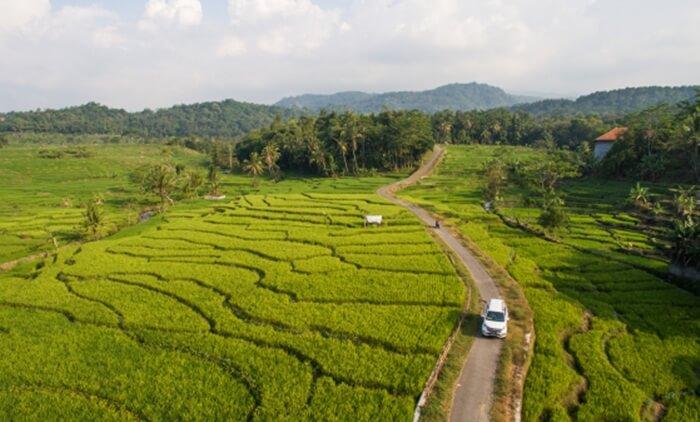 Rute menuju lokasi wanawisata ciwaringin cirebon yang melalui indahnya daerah pedesaan