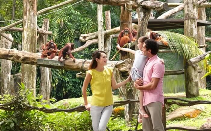 singapore zoo, walau hutan singapura tidak luas, namun kebun binatang ini menjadi tempat wisata di singapura yang menampilkan suasana hutan